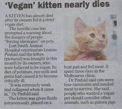 Vegan Kitty Nearly Dies