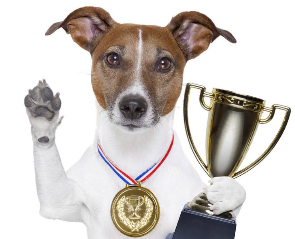 Best Dog Food Australia 2021
