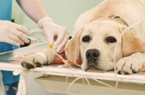 High carbohydrate dry foods linked to kidney failure in dogs?